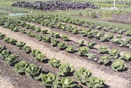 The Rainbarrel Man The Landscape Drip Irrigation Kit