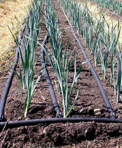 The Rainbarrel Man - The Landscape Drip Irrigation Kit
